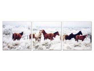 Modrest Mustangs 3-Panel Photo On Canvas